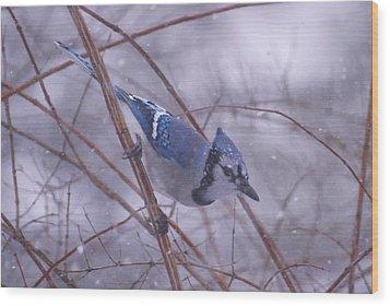Blue Jay Way Wood Print
