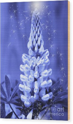 Blue Magic Sparkle Lupine  Wood Print by Cathy  Beharriell
