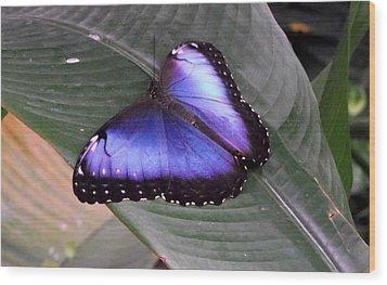 Blue Morph Wood Print