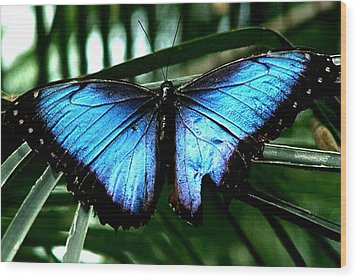 Blue Morph Wood Print by Diane Wallace