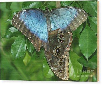 Blue Morpho Butterflies Wood Print by Sabrina L Ryan