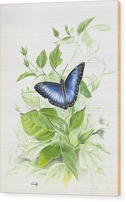 Blue Morpho On Hibiscus Wood Print