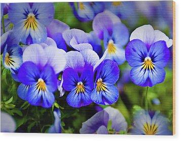 Blue Pansies Wood Print by Tamyra Ayles