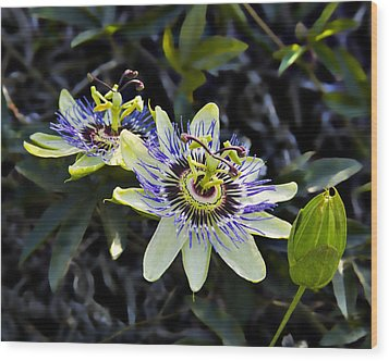 Blue Passion Flower Wood Print by Kelley King