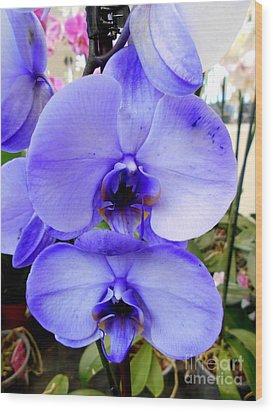 Blue Phalaenopsis Orchid Wood Print