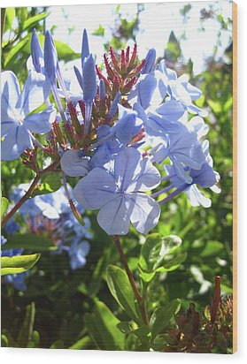 Wood Print featuring the photograph Blue Plumbago by Mary Ellen Frazee