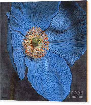 Blue Poppy Wood Print by Lawrence Supino