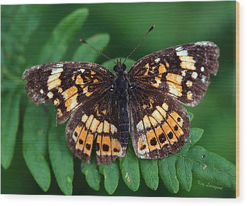 Wood Print featuring the photograph Blue Ridge Butterfly by Kay Lovingood