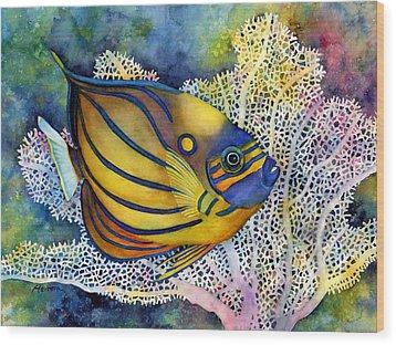 Blue Ring Angelfish Wood Print