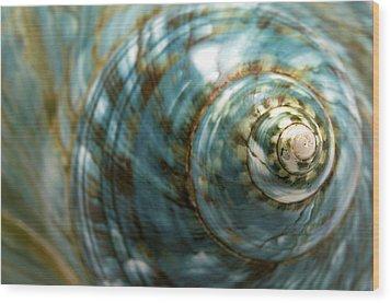 Blue Seashell Wood Print