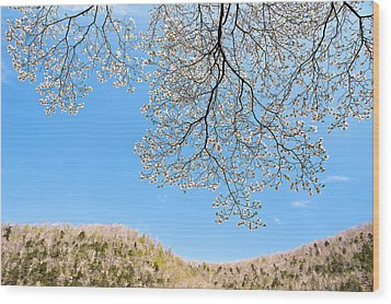 Blue Skies And Dogwood Wood Print by Tamyra Ayles