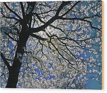 Wood Print featuring the photograph Blue Skies Smiling At Me by Linda Unger
