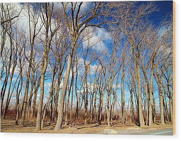 Wood Print featuring the photograph Blue Sky And Trees by Valentino Visentini