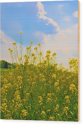Blue Sky Yellow Flowers Wood Print by Bill Cannon