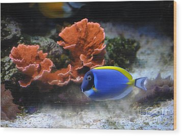 Blue Tang Fish And Coral Wood Print