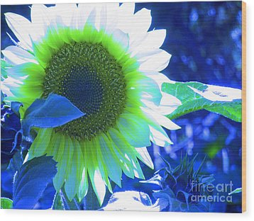 Blue Tinted Sunflower Wood Print by Sonya Chalmers