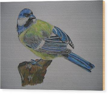 Blue Tit Wood Print by Tanya Patey