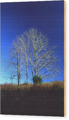 Blue Tree In Tennessee Wood Print