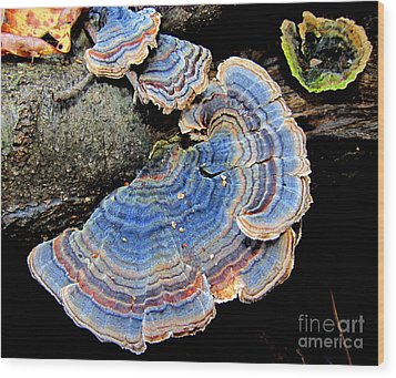 Blue Turkeytail Fungi Wood Print by Joshua Bales
