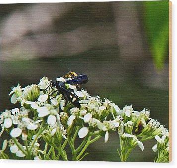 Blue Wasp 2 Wood Print by Douglas Barnett