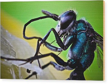 Blue Wasp On Fruit Wood Print by Ryan Kelly