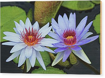 Wood Print featuring the photograph Blue Water Lilies by Judy Vincent