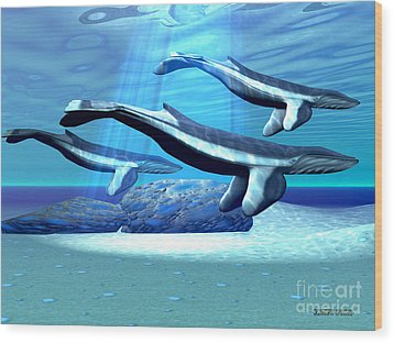 Blue Whale Sanctuary Wood Print by Corey Ford