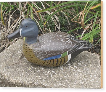 Blue-winged Duck Wood Print
