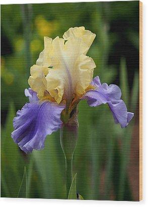 Blue Yellow Iris Germanica Wood Print by Rona Black