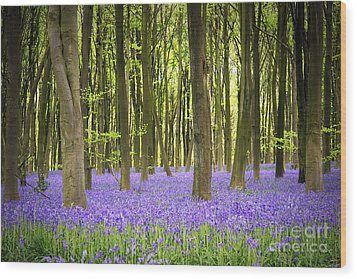 Bluebell Carpet Wood Print by Jane Rix