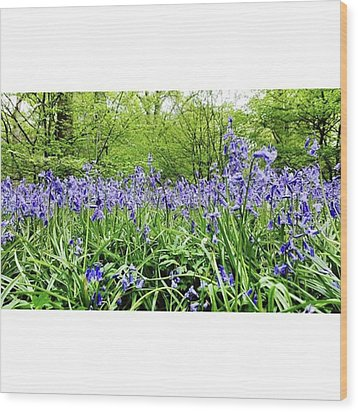 #bluebell #flowers #spring  #woodland Wood Print by Natalie Anne