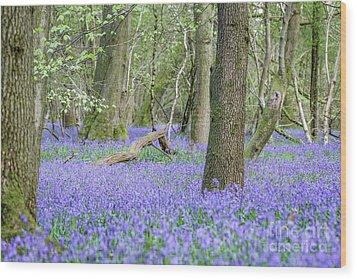 Bluebell Wood - Hyacinthoides Non-scripta - Surrey , England Wood Print