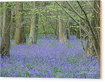 Bluebell Woodland Hyacinthoides Non-scripta, Surrey , England Wood Print