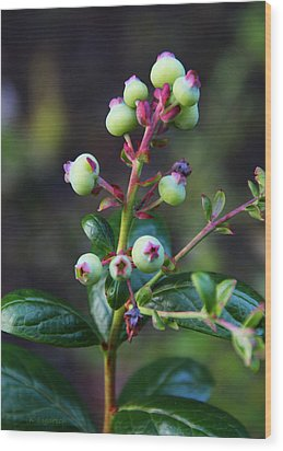 Blueberries Wood Print by Kerri Ligatich