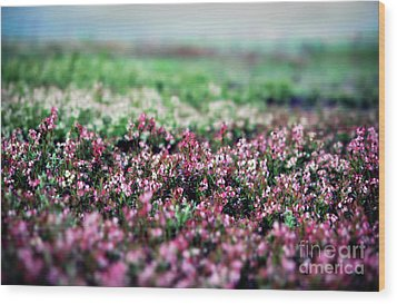 Wood Print featuring the photograph Blueberry Blossoms  by Alana Ranney