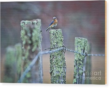 Wood Print featuring the photograph Bluebird 040517 by Douglas Stucky