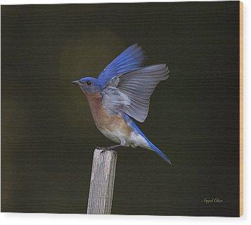 Bluebird  Wood Print by Angel Cher