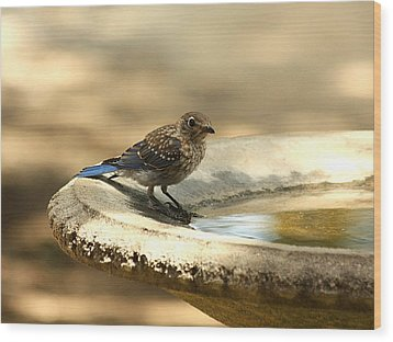 Wood Print featuring the photograph Bluebird Bath Time by Sheila Brown