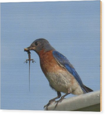 Wood Print featuring the photograph Bluebird Bringing Home Lunch by Jeanne Kay Juhos