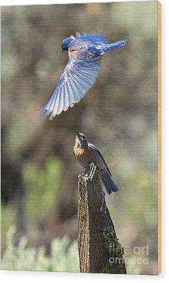Bluebird Buzz Wood Print by Mike Dawson