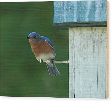 Bluebird Wood Print by Douglas Stucky