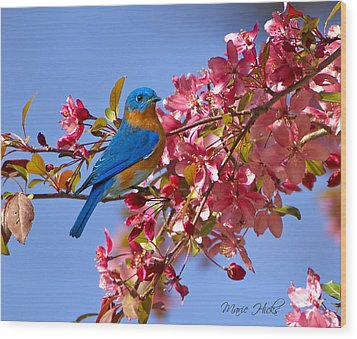 Bluebird In Apple Blossoms Wood Print