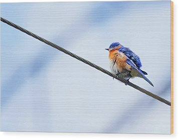 Wood Print featuring the photograph Bluebird Of Happiness by Linda Unger