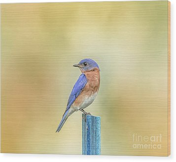 Bluebird On Blue Stick Wood Print by Robert Frederick