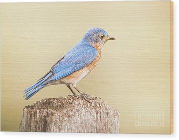 Bluebird On Fence Post Wood Print by Robert Frederick