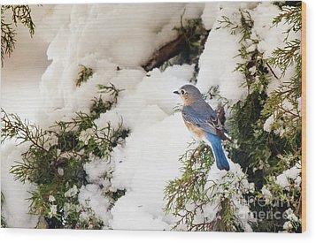Bluebird On Snow-laden Cedar Wood Print by Robert Frederick