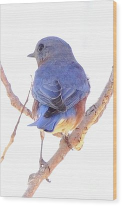 Bluebird On White Wood Print
