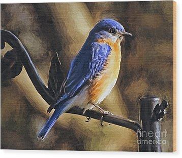 Bluebird Portrait Wood Print by Sue Melvin