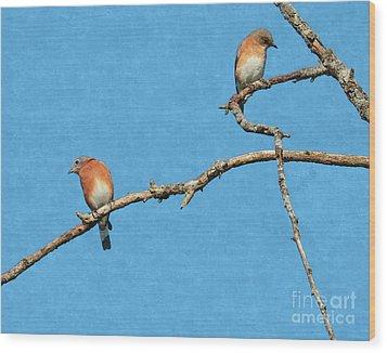 Bluebirds On A Crazy Limb Wood Print