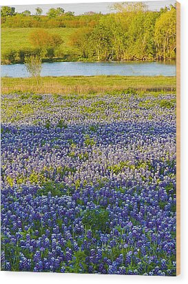 Bluebonnet Field Wood Print by Debbie Karnes